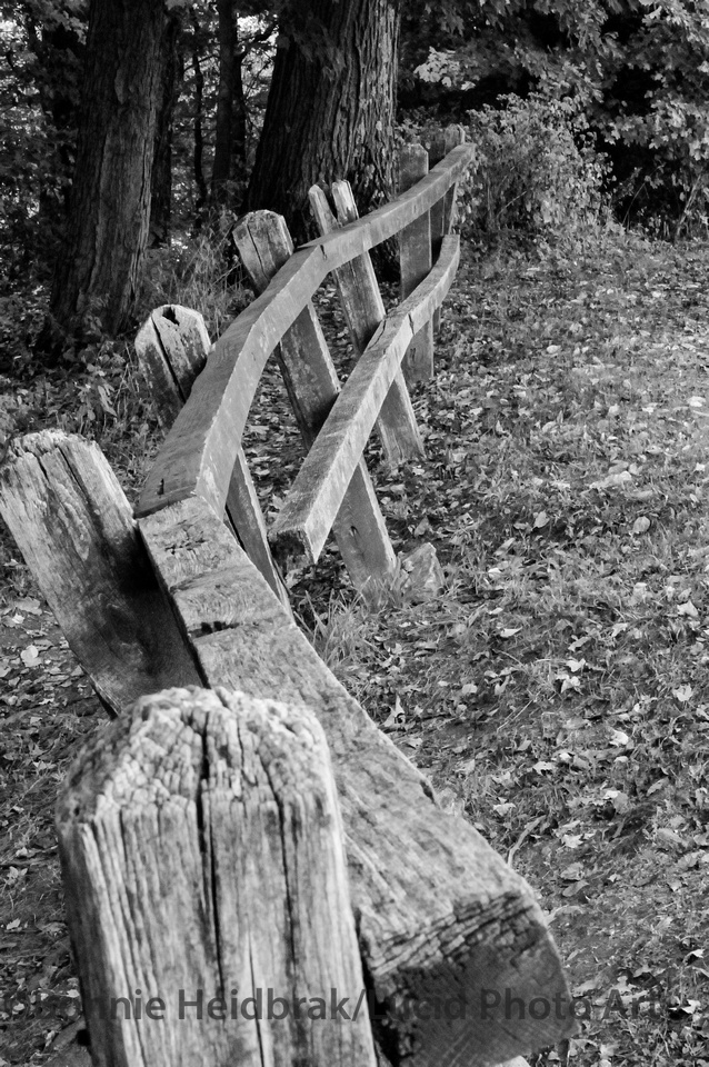 A wooden that has formed a beautiful curve all on its own.